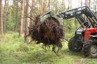 022_eiche_fischerhof.JPG (200404 Byte)
